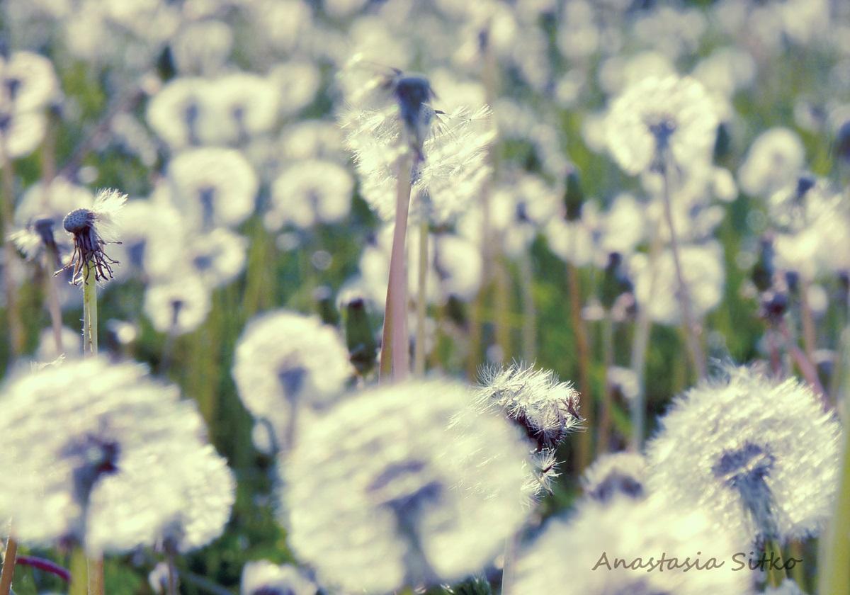 Beautiful photos of Belarusian country life by Anastasia Sitko - 26