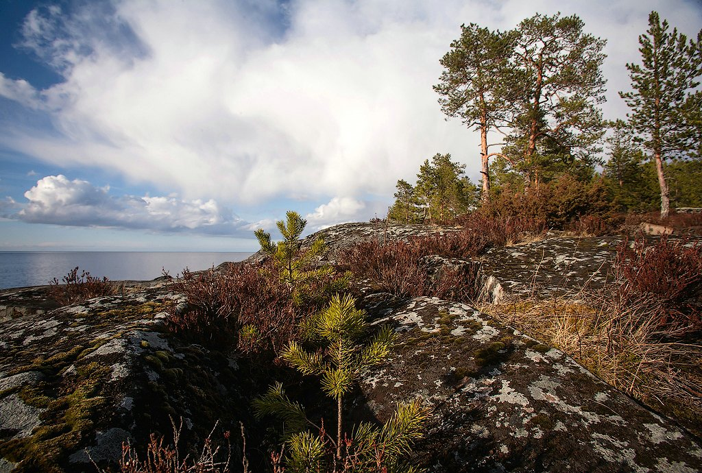 Cold Republic of Karelia: Beautiful photos of untouched nature - 31