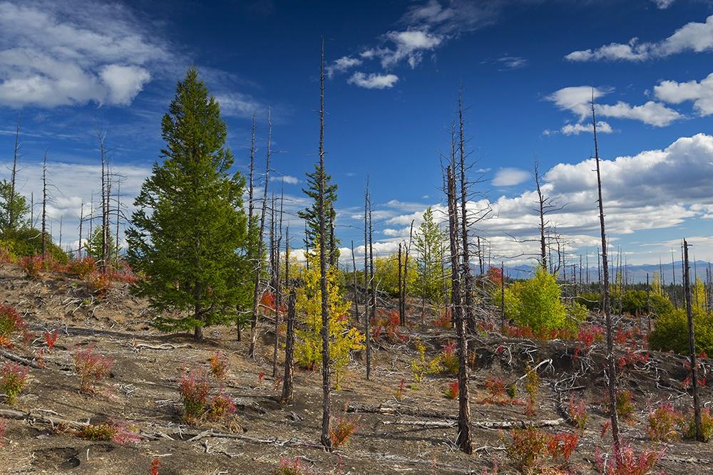Volcanoes, caves, and wonderful wild nature of Kamchatka Peninsula - 24