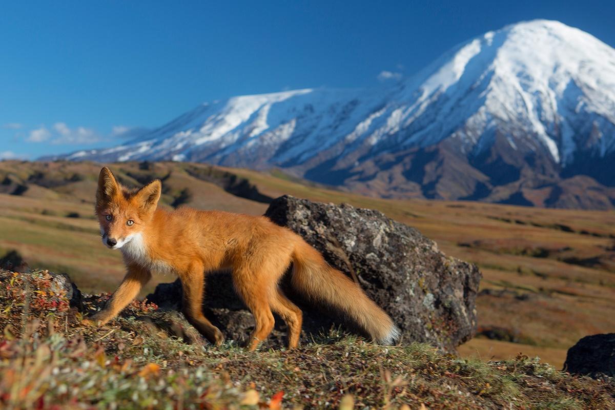 Volcanoes, caves, and wonderful wild nature of Kamchatka Peninsula - 09