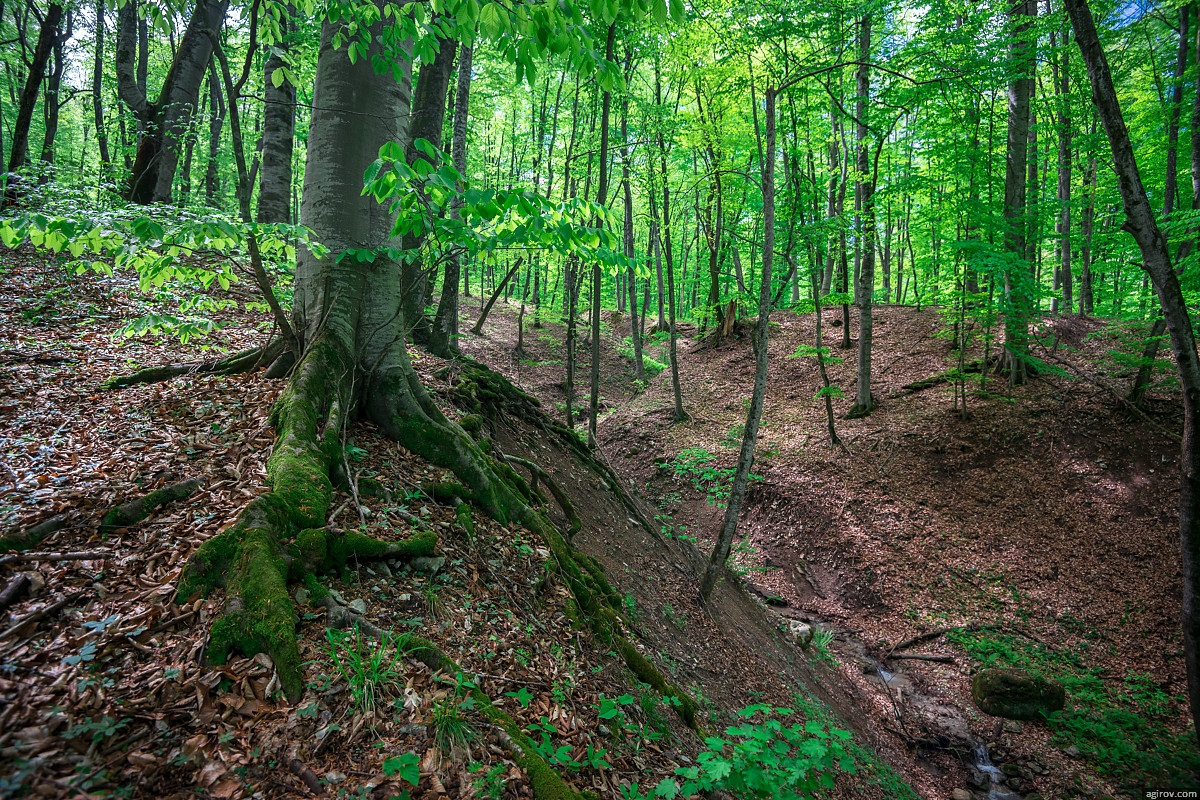 Nature of Ingushetia: Picturesque landscapes of the Republic - 27