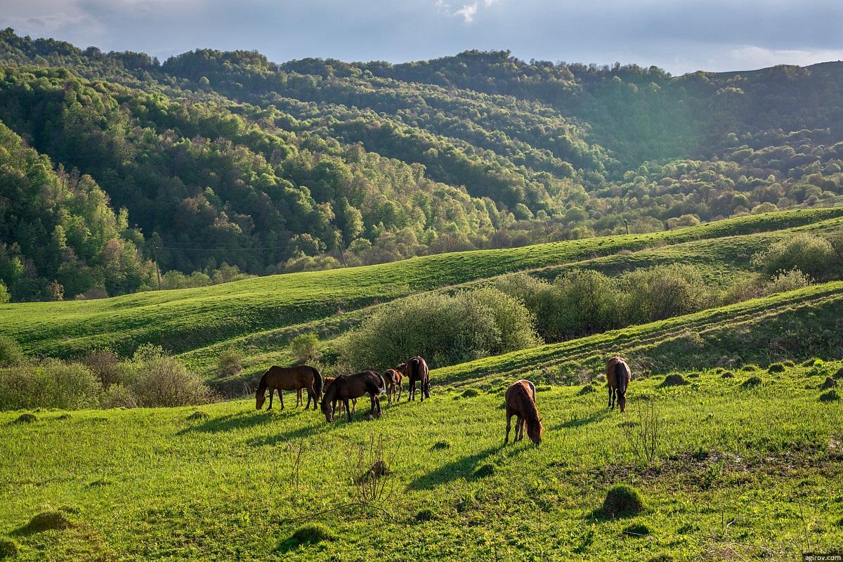 Nature of Ingushetia: Picturesque landscapes of the Republic - 31