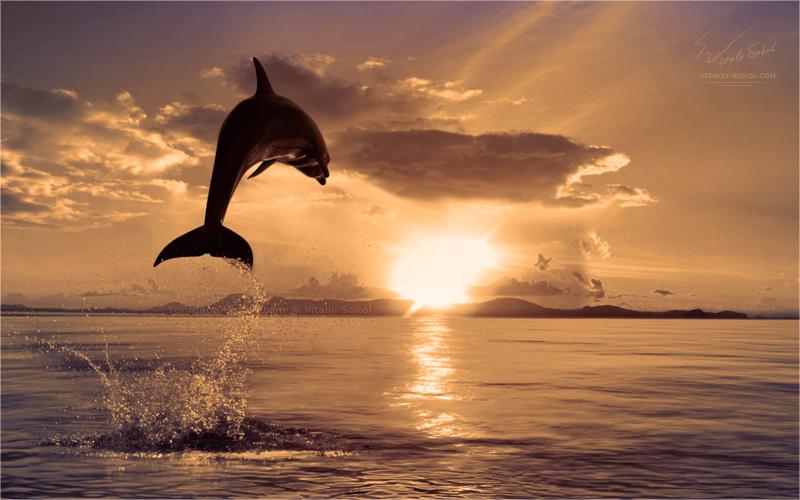 Underwater dances: Wonderful undersea photos by Vitaly Sokol - 10