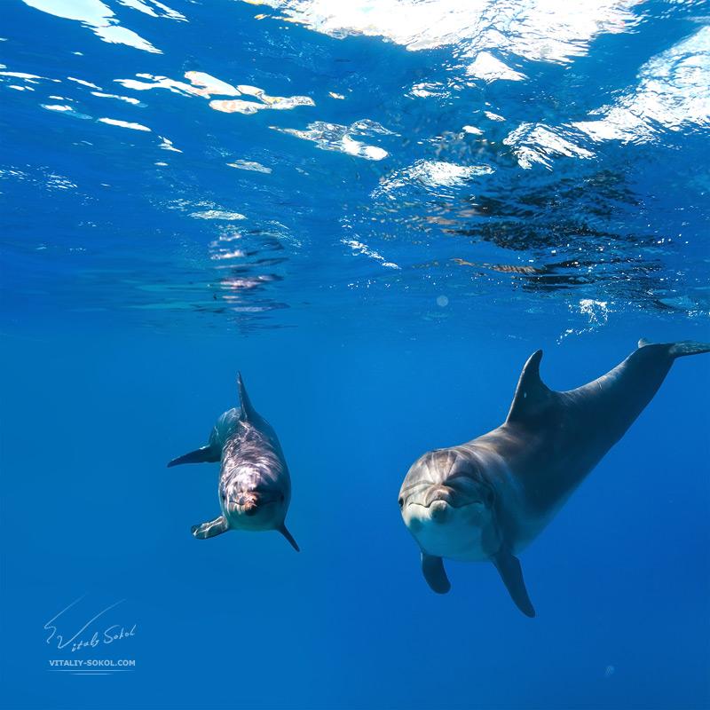 Underwater dances: Wonderful undersea photos by Vitaly Sokol - 12