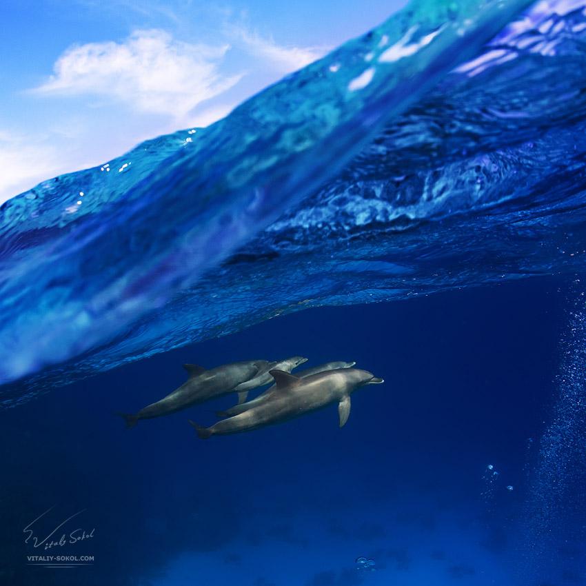 Underwater dances: Wonderful undersea photos by Vitaly Sokol - 13