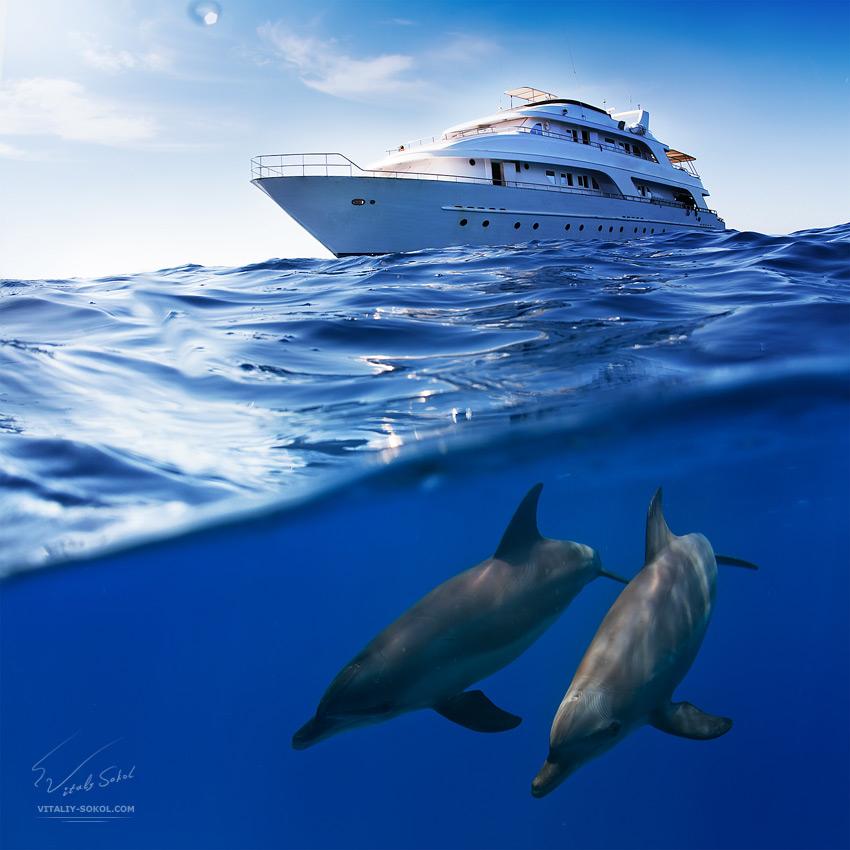 Underwater dances: Wonderful undersea photos by Vitaly Sokol - 14