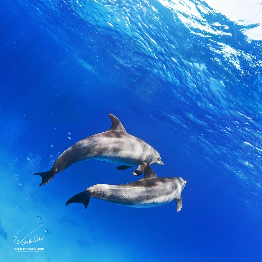Underwater dances: Wonderful undersea photos by Vitaly Sokol - 02
