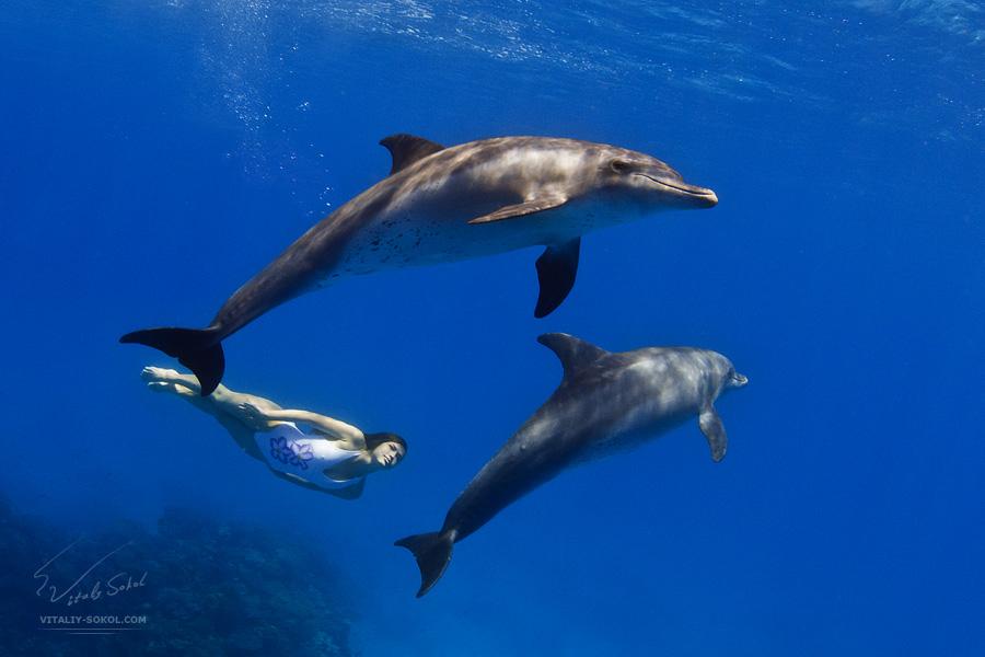 Underwater dances: Wonderful undersea photos by Vitaly Sokol - 20