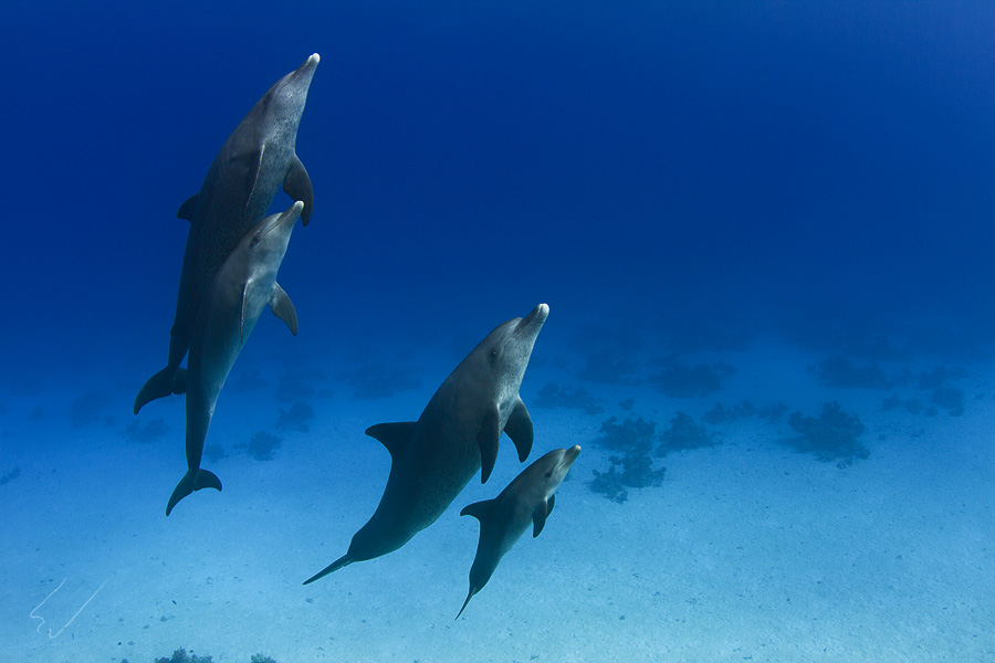 Underwater dances: Wonderful undersea photos by Vitaly Sokol - 03