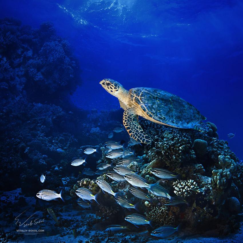 Underwater dances: Wonderful undersea photos by Vitaly Sokol - 38