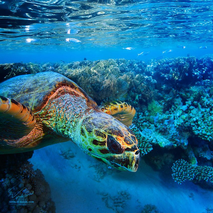 Underwater dances: Wonderful undersea photos by Vitaly Sokol - 39