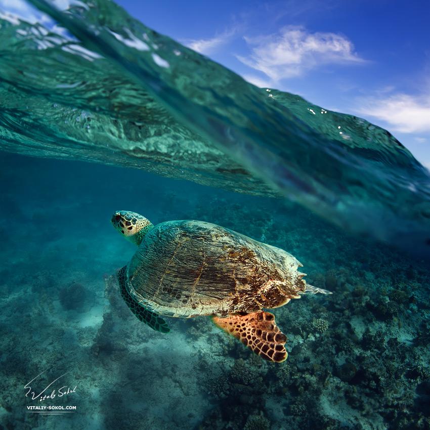 Underwater dances: Wonderful undersea photos by Vitaly Sokol - 40