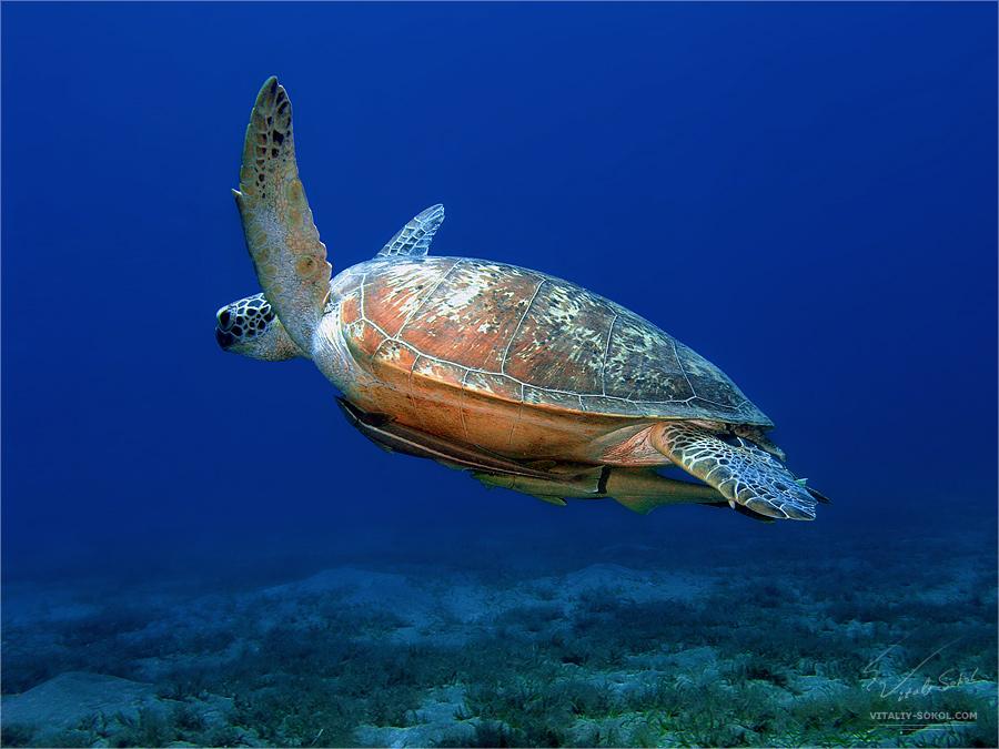 Underwater dances: Wonderful undersea photos by Vitaly Sokol - 41