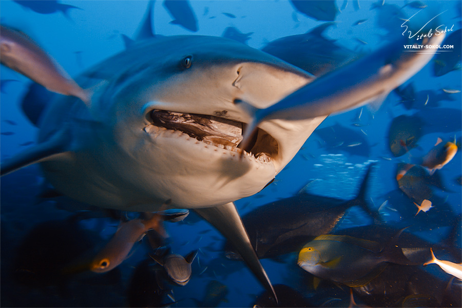 Underwater dances: Wonderful undersea photos by Vitaly Sokol - 42