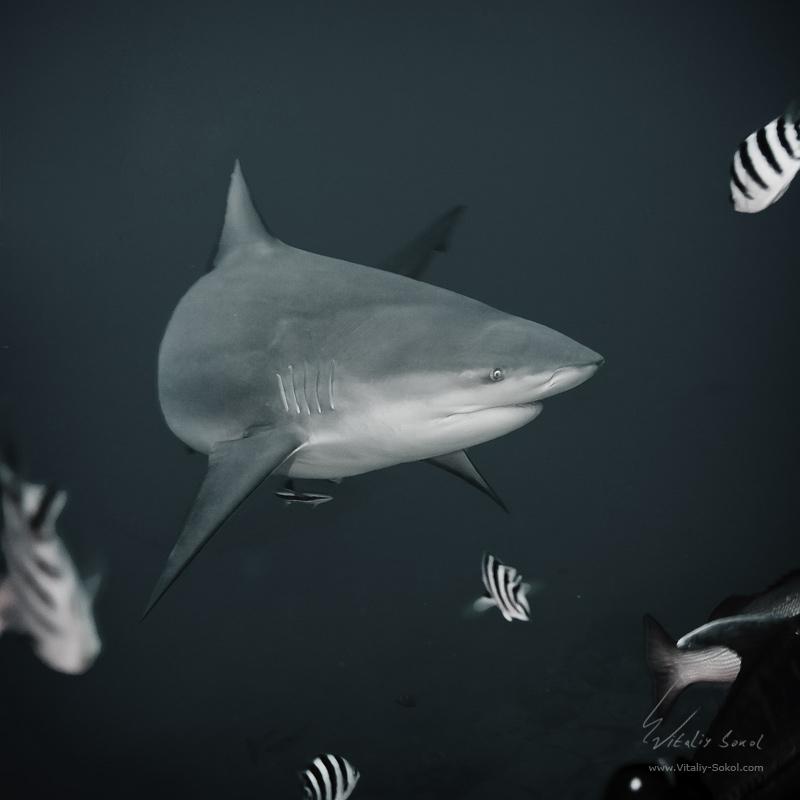 Underwater dances: Wonderful undersea photos by Vitaly Sokol - 43