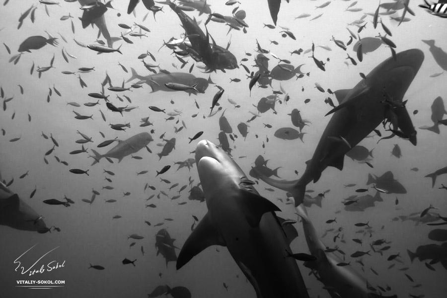 Underwater dances: Wonderful undersea photos by Vitaly Sokol - 44