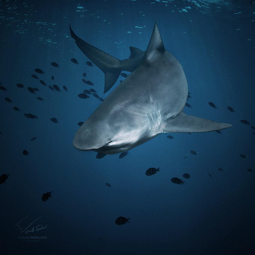 Underwater dances: Wonderful undersea photos by Vitaly Sokol - 45