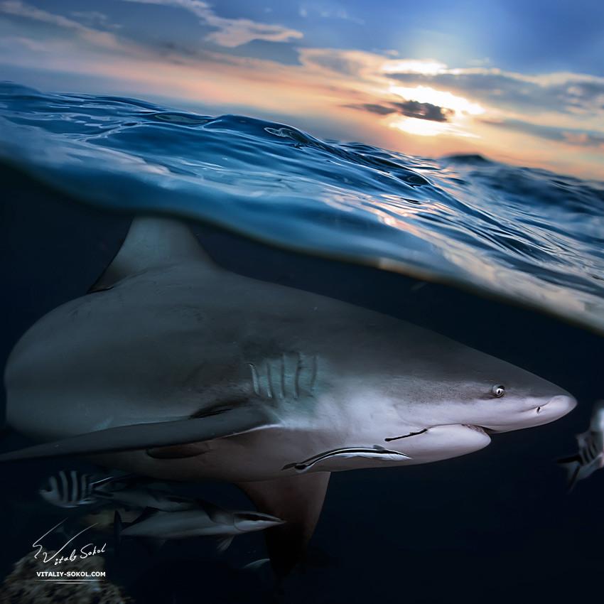 Underwater dances: Wonderful undersea photos by Vitaly Sokol - 46