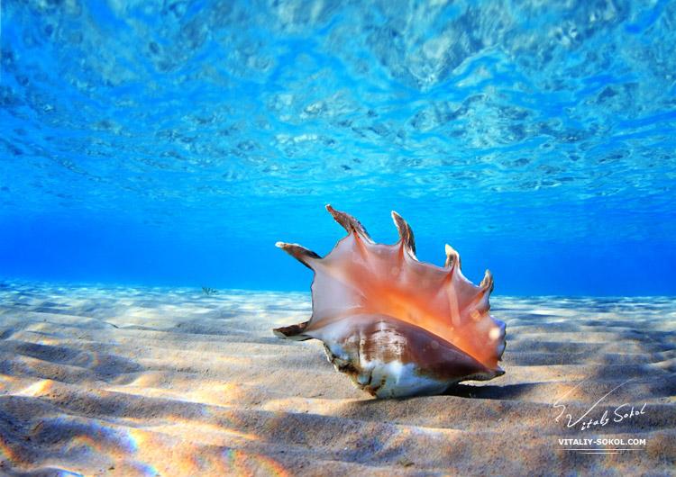 Underwater dances: Wonderful undersea photos by Vitaly Sokol - 47
