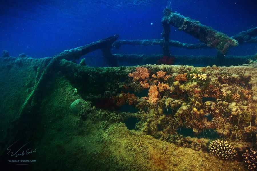 Underwater dances: Wonderful undersea photos by Vitaly Sokol - 53
