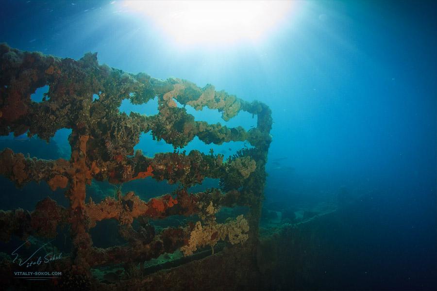 Underwater dances: Wonderful undersea photos by Vitaly Sokol - 54