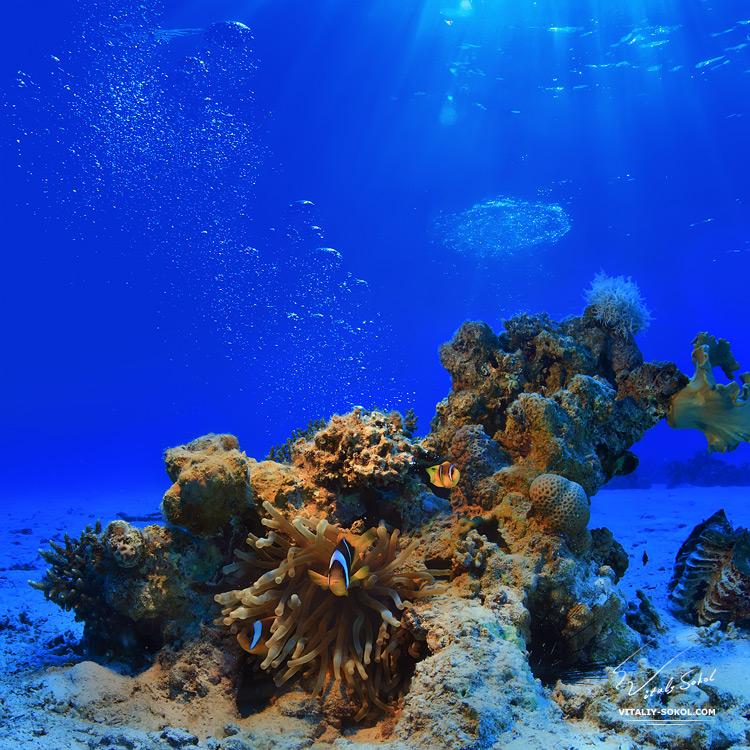 Underwater dances: Wonderful undersea photos by Vitaly Sokol - 56
