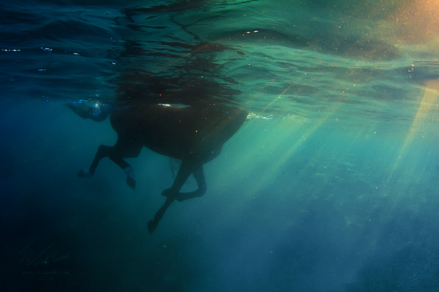 Underwater dances: Wonderful undersea photos by Vitaly Sokol - 57