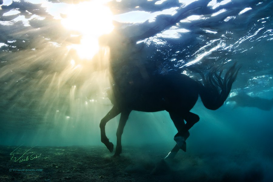 Underwater dances: Wonderful undersea photos by Vitaly Sokol - 58