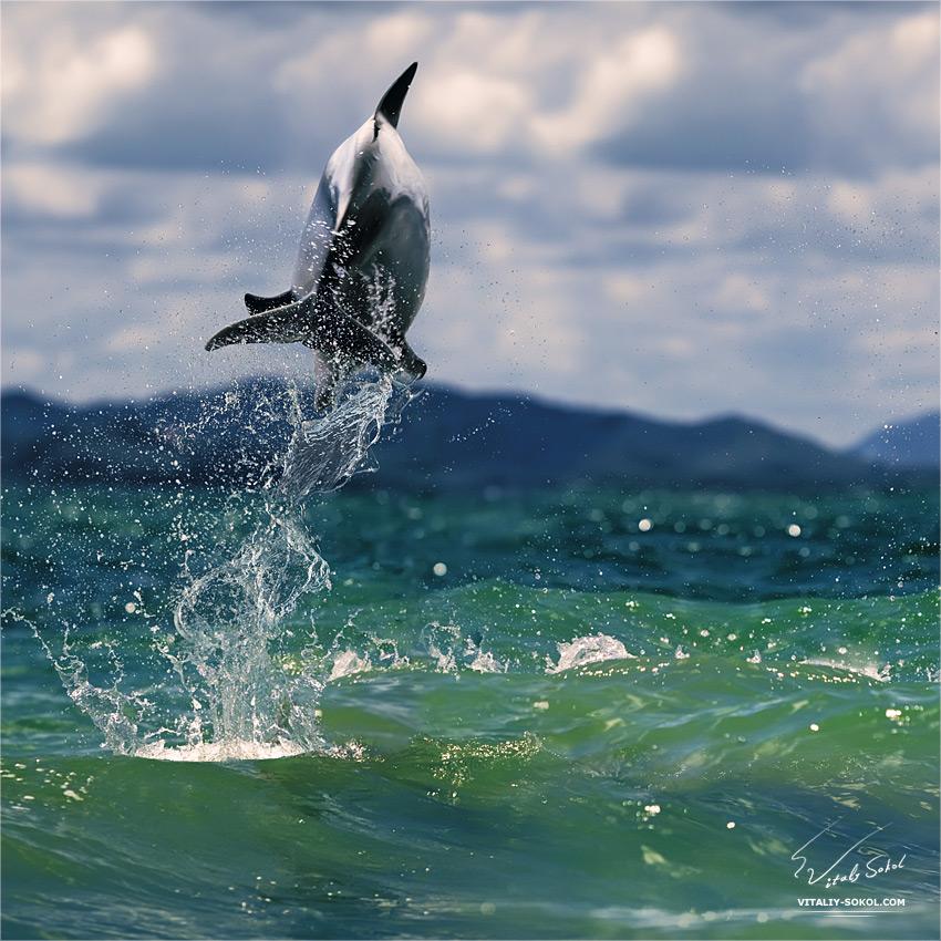 Underwater dances: Wonderful undersea photos by Vitaly Sokol - 06