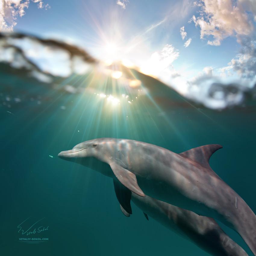 Underwater dances: Wonderful undersea photos by Vitaly Sokol - 09
