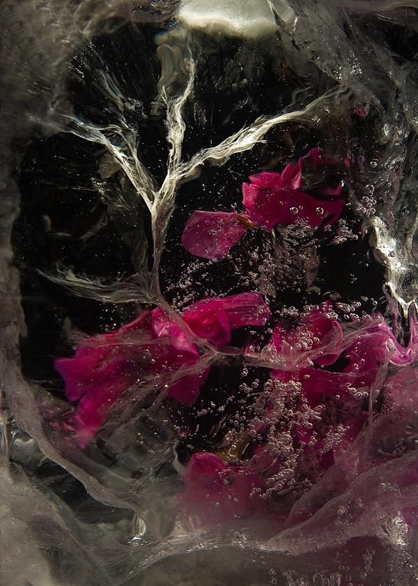 Ice and flowers: Nice frozen still-life photography by Vasilij Cesenov - 14