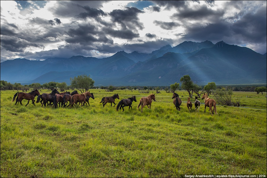 Republic of Buryatia: Wild landscapes and horses of Transbaikalia - 04