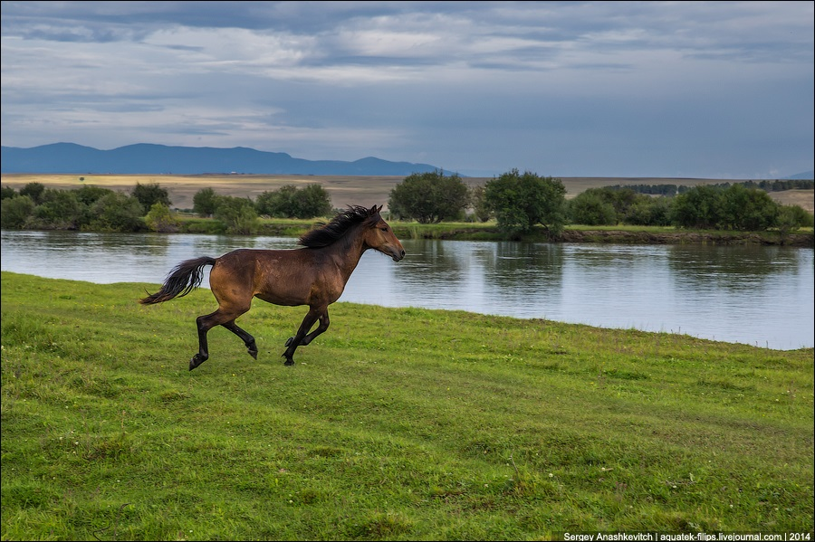 Republic of Buryatia: Wild landscapes and horses of Transbaikalia - 06