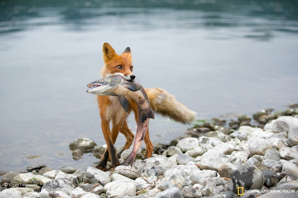 National Geographic: Photo contest Wild Nature of Russia 2014 - Part 1 - 13