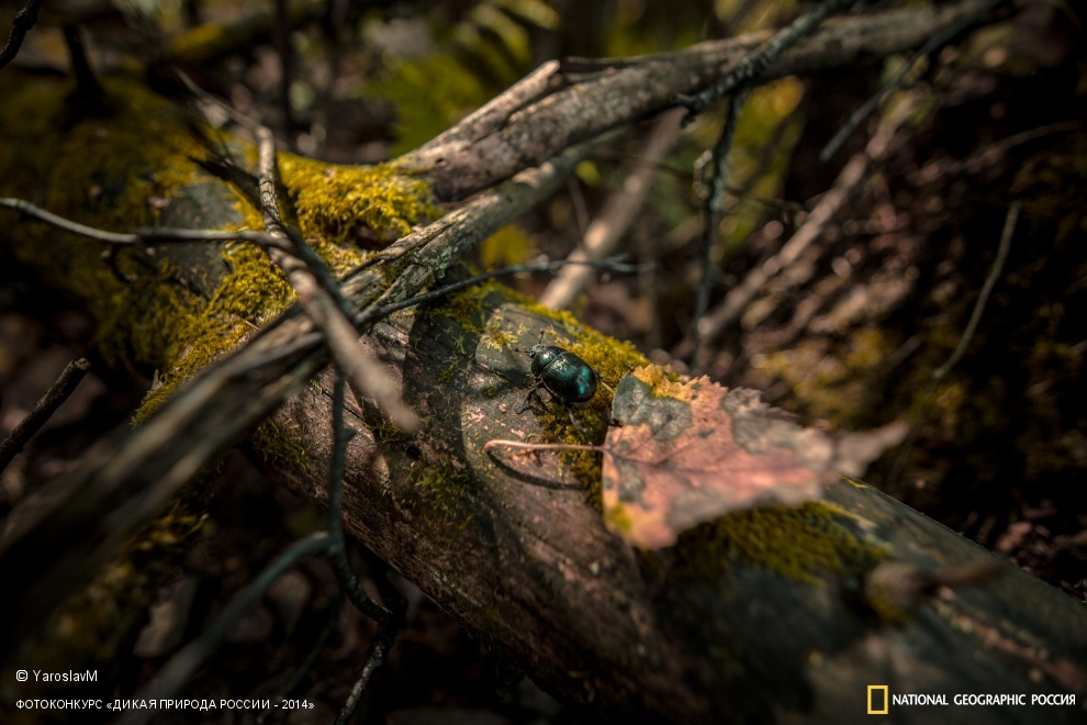 National Geographic: Photo contest Wild Nature of Russia 2014 - Part 1 - 14