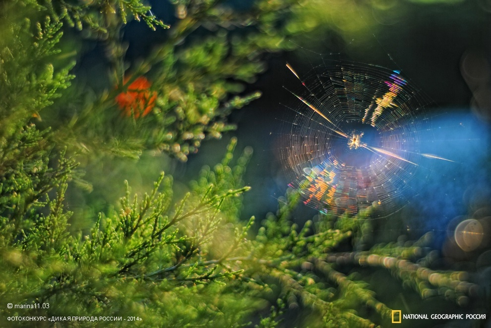 National Geographic: Photo contest Wild Nature of Russia 2014 - Part 1 - 29