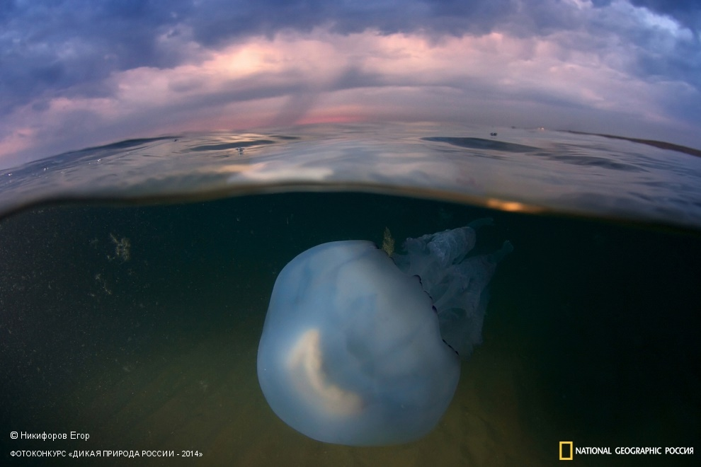 National Geographic: Photo contest Wild Nature of Russia 2014 - Part 1 - 38