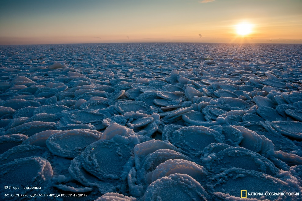 National Geographic: Photo contest Wild Nature of Russia 2014 - Part 1 - 40