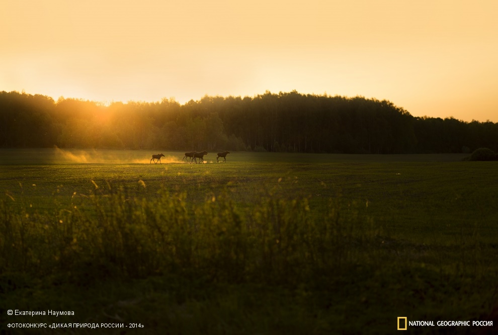 National Geographic: Photo contest Wild Nature of Russia 2014 - Part 1 - 51