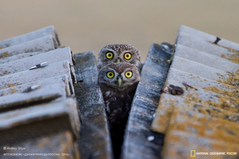 National Geographic: Photo contest Wild Nature of Russia 2014 - Part 1 - 56