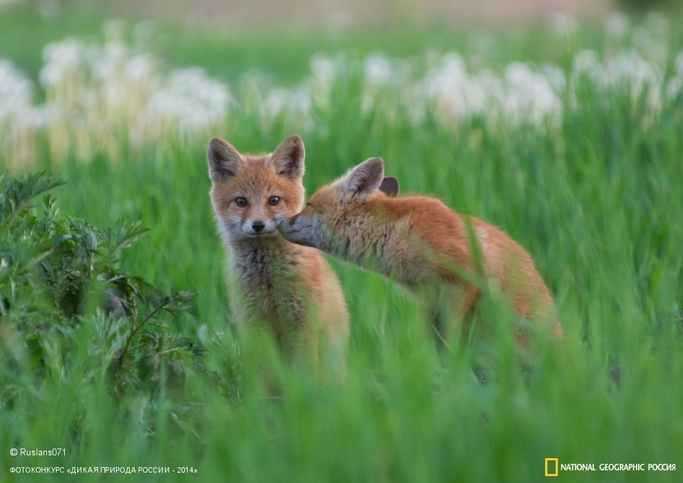 National Geographic: Photo contest Wild Nature of Russia 2014 - Part 1 - 59