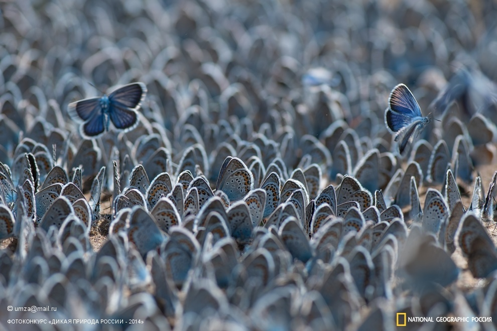National Geographic: Photo contest Wild Nature of Russia 2014 - Part 1 - 70