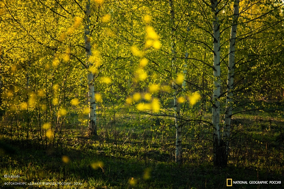National Geographic: Photo contest Wild Nature of Russia 2014 - Part 1 - 71
