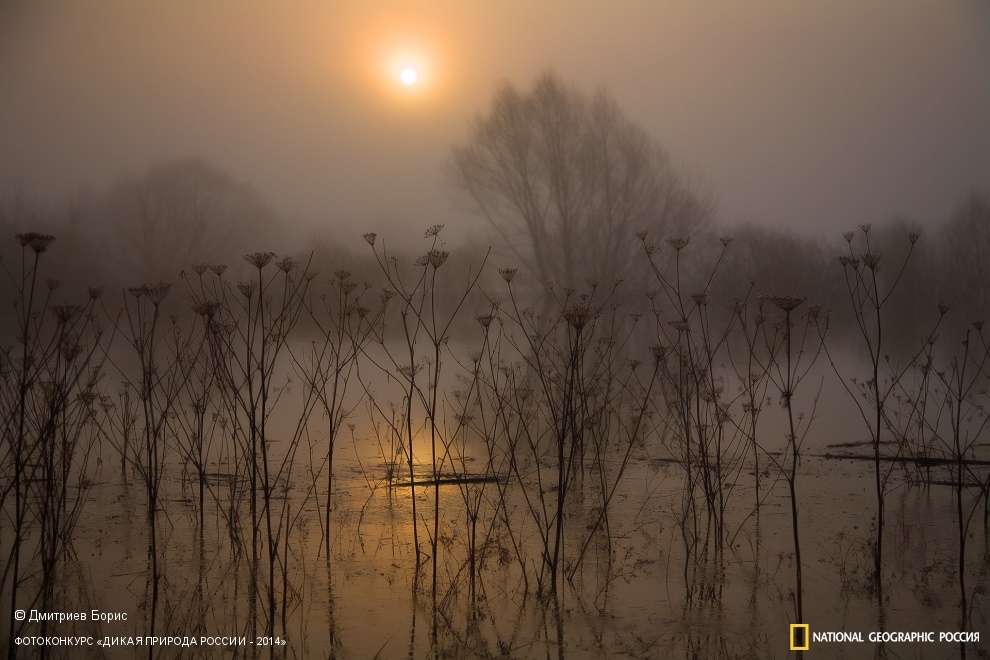 National Geographic: Photo contest Wild Nature of Russia 2014 - Part 1 - 09