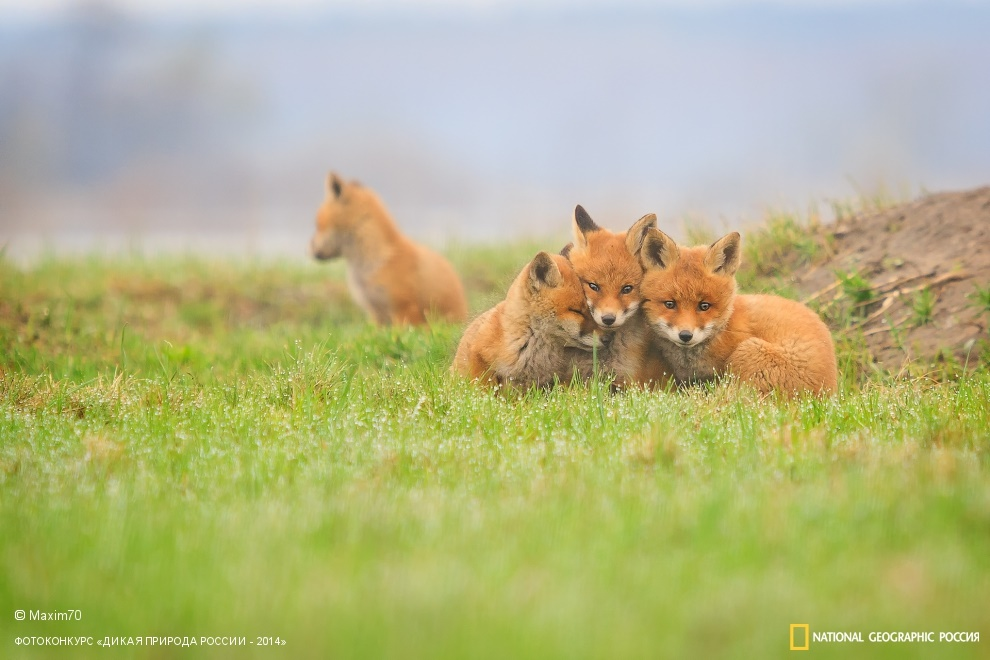 National Geographic: Photo contest Wild Nature of Russia - Part 2 - 20