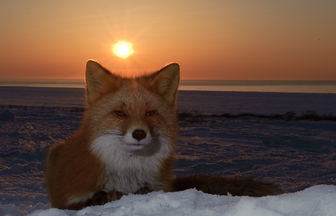 Beautiful photos from Kamchatka - 09