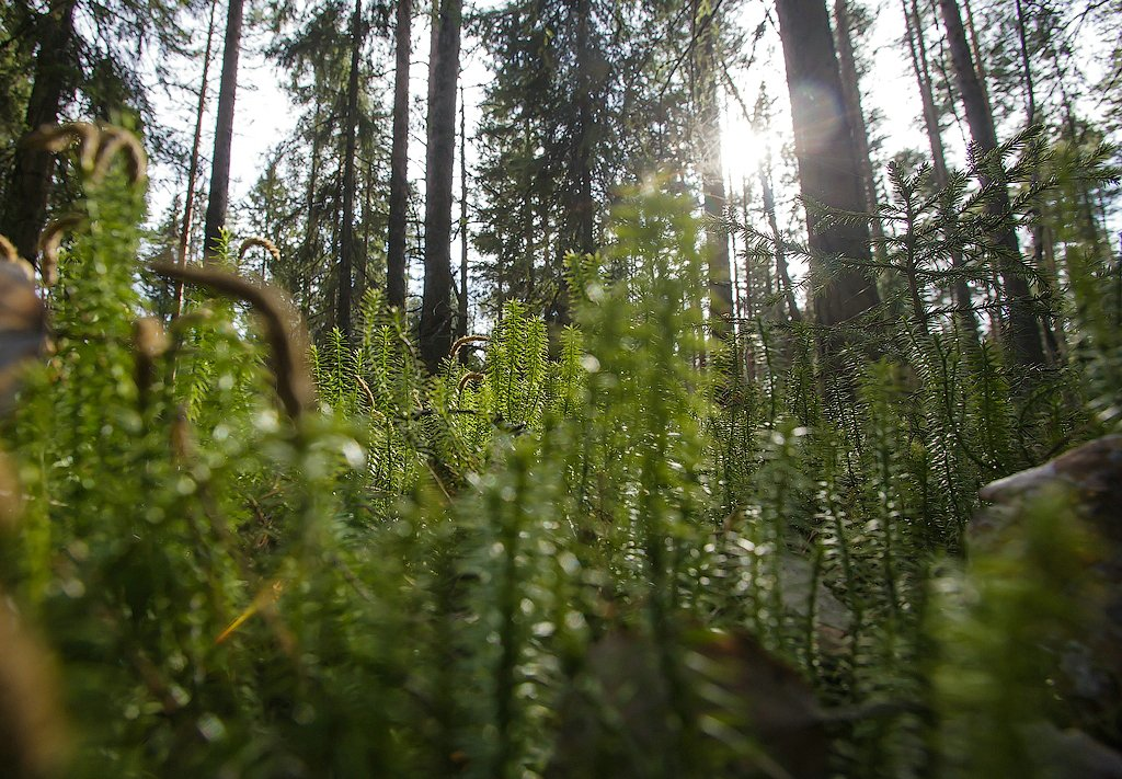 Cold Republic of Karelia: Beautiful photos of untouched nature - 01