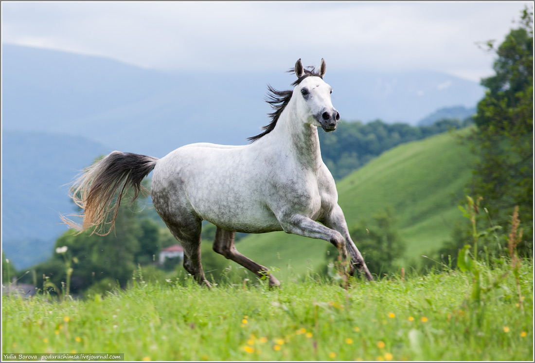 Karachay–Cherkess Republic: A territory of enchanting horses - 01