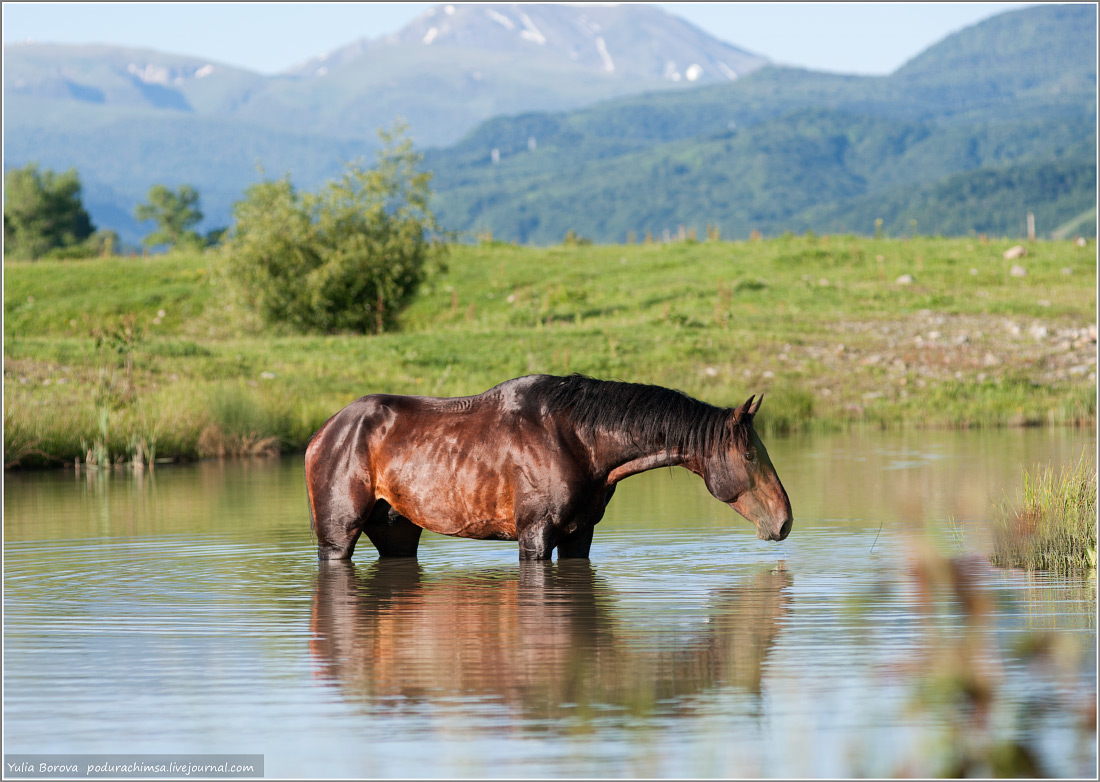 Karachay–Cherkess Republic: A territory of enchanting horses - 17