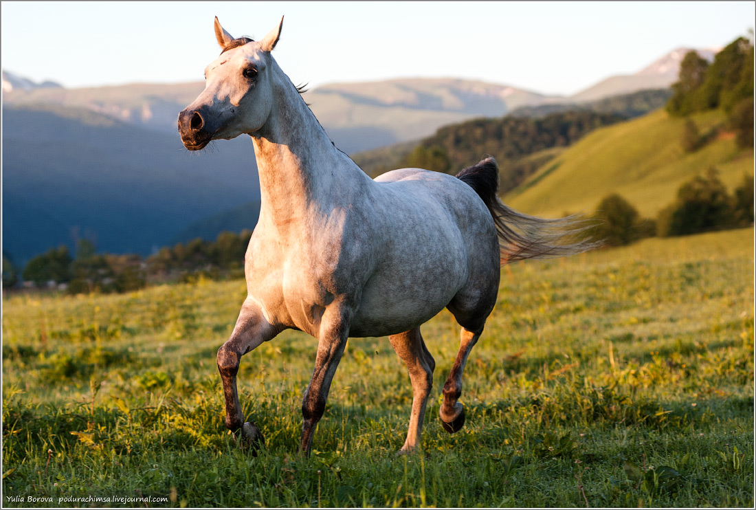 Karachay–Cherkess Republic: A territory of enchanting horses - 27